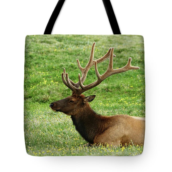 Tote Bag featuring the photograph Rocky Mountain Elk 4 by Marie Leslie