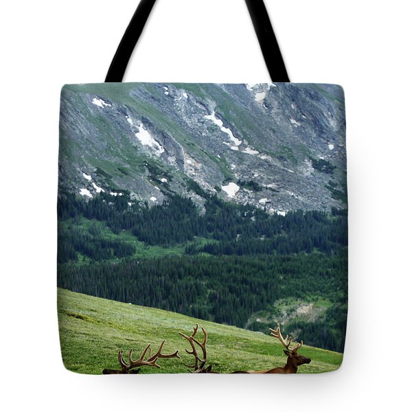 Tote Bag featuring the photograph Rocky Mountain Elk 5 by Marie Leslie