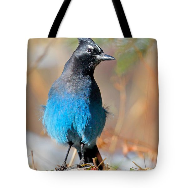 Rocky Mountain Steller's Jay Tote Bag
