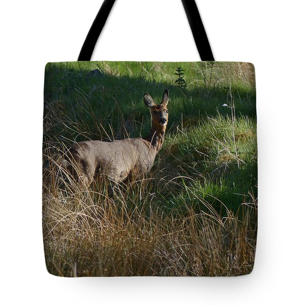 Tote Bag featuring the photograph Roe Doe  by Phil Banks