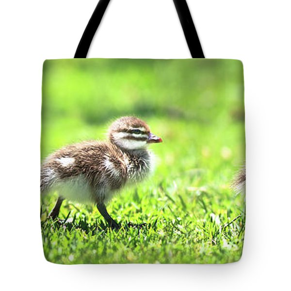 Tote Bag featuring the photograph Rogue Duckling, Yanchep National Park by Dave Catley