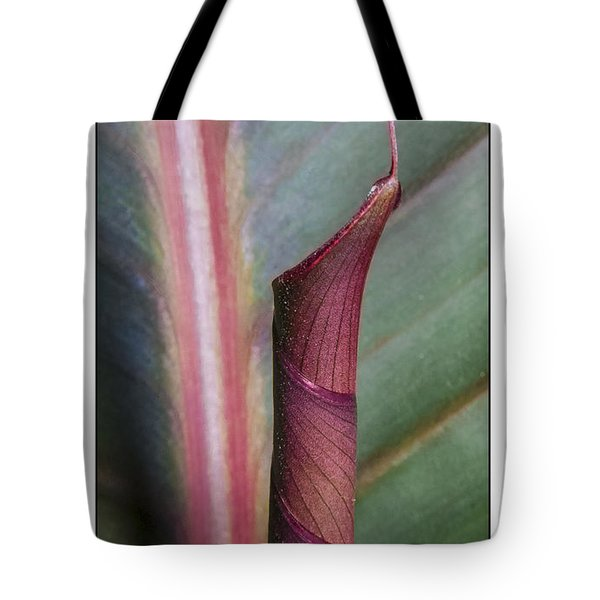 Roll Our The Red Carpet Tote Bag by Karen Musick