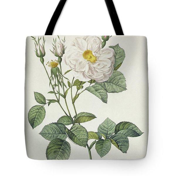 Rosa Alba Foliacea Tote Bag