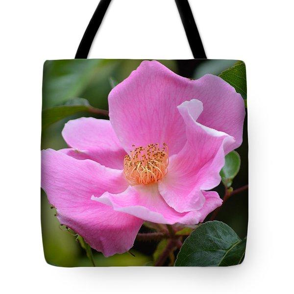 Rosa Canina. Tote Bag by Terence Davis