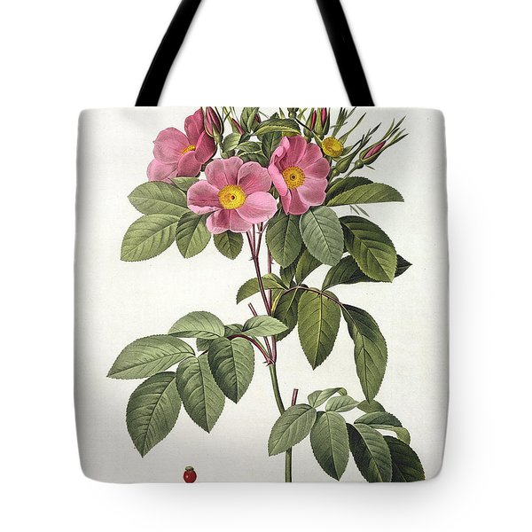 Rosa Carolina Corymbosa Tote Bag