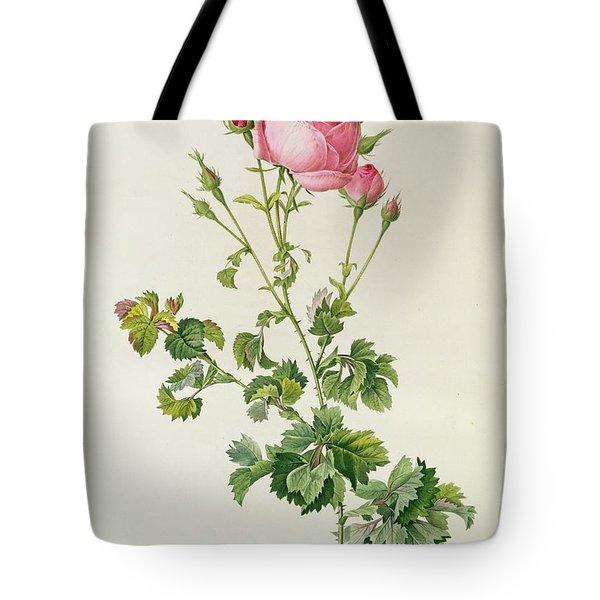 Rosa Centifolia Bipinnata Tote Bag by Pierre Joseph Redoute