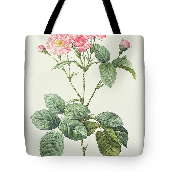Rosa Centifolia Caryophyllea Tote Bag by Pierre Joseph Redoute