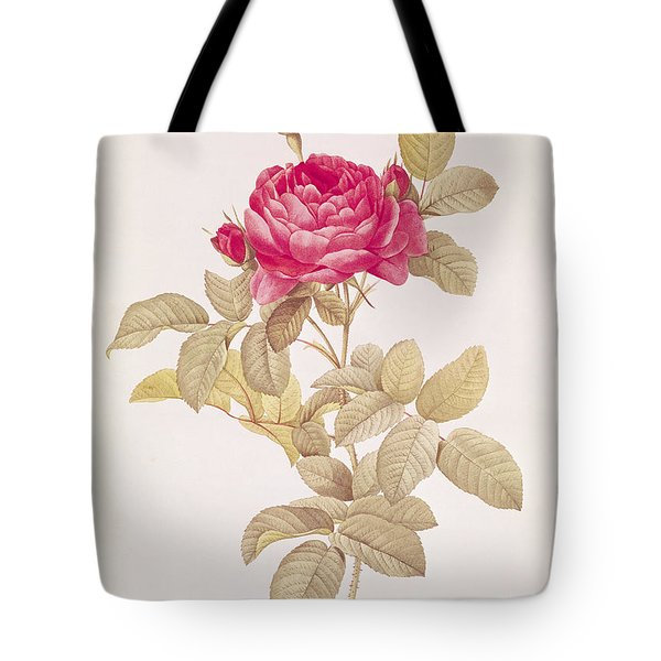 Rosa Gallica Pontiana Tote Bag by Pierre Joseph Redoute