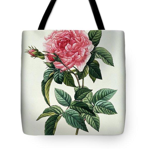Rosa Gallica Regalis Tote Bag by Pierre Joseph Redoute