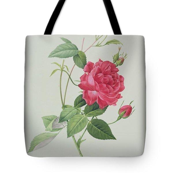 Rosa Indica Cruenta Tote Bag