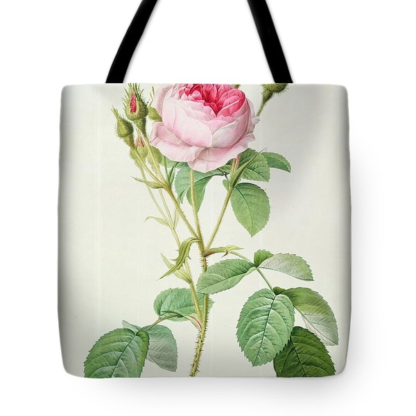 Rosa Muscosa Multiplex Tote Bag