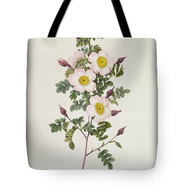 Rosa Pimpinelli Folia Inermis Tote Bag