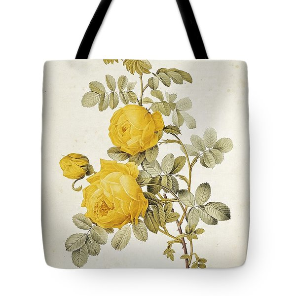 Rosa Sulfurea Tote Bag by Pierre Redoute