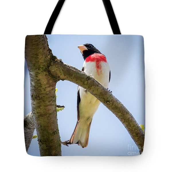 Tote Bag featuring the photograph Rose-breasted Grosbeak Looking At You by Ricky L Jones