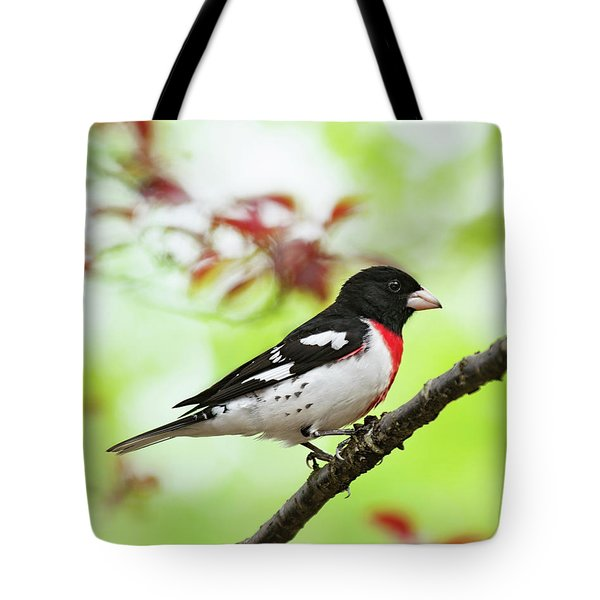 Rose-breasted Grosbeak Spring 2018-1 Tote Bag