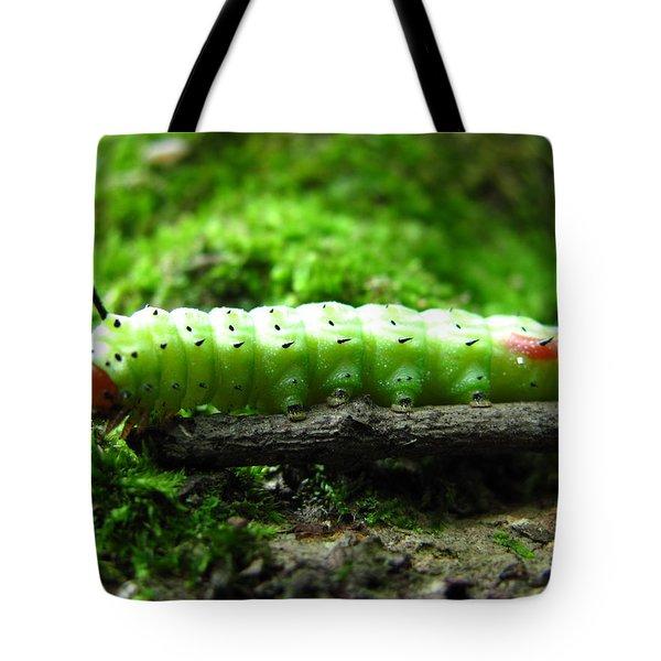 Rosy Maple Moth Caterpillar Tote Bag