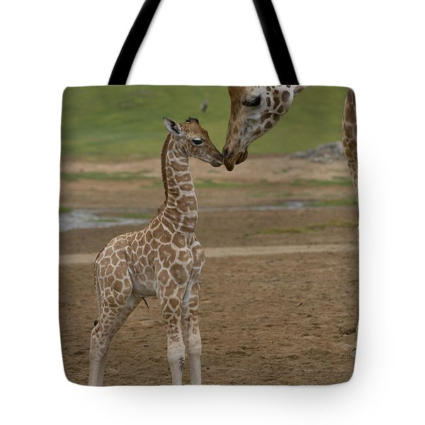 Tote Bag featuring the photograph Rothschild Giraffe Giraffa by San Diego Zoo