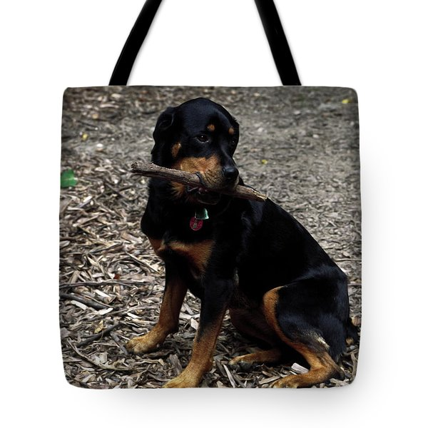 Rottweiler Dog Holding Stick In Mouth Tote Bag by Sally Weigand