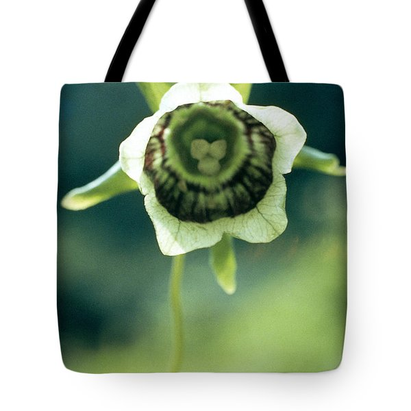 Roundleaf Asiabell Tote Bag by American School