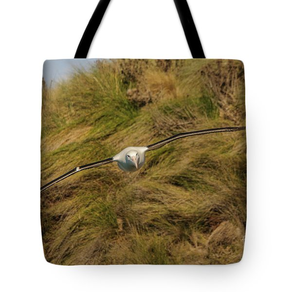 Royal Albatross 2 Tote Bag by Werner Padarin