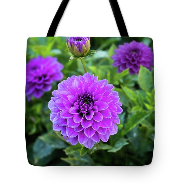 Royal Dahlia Delight Tote Bag