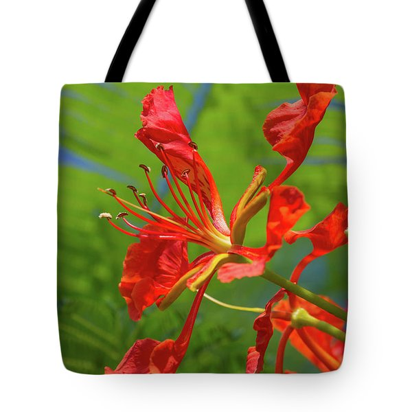 Royal Poinciana Flower Tote Bag