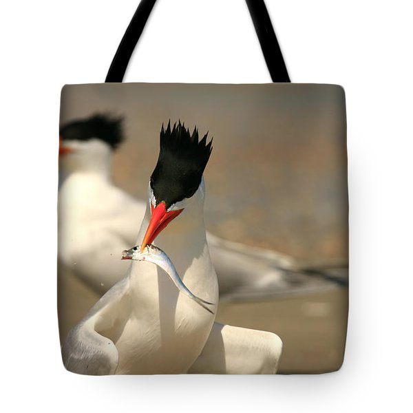 Royal Tern Catch Tote Bag