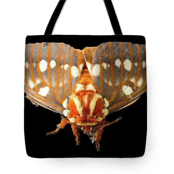 Royal Walnut Moth On Black Tote Bag
