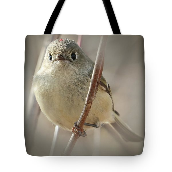 Ruby-crowned Cuteness Tote Bag by Anita Oakley