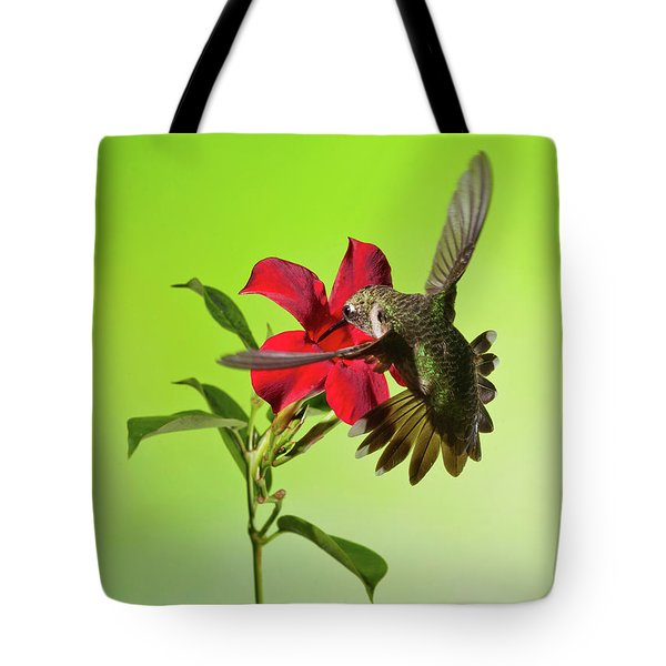 Ruby-throated Hummingbird On Mandavilla Flower Tote Bag by Lara Ellis