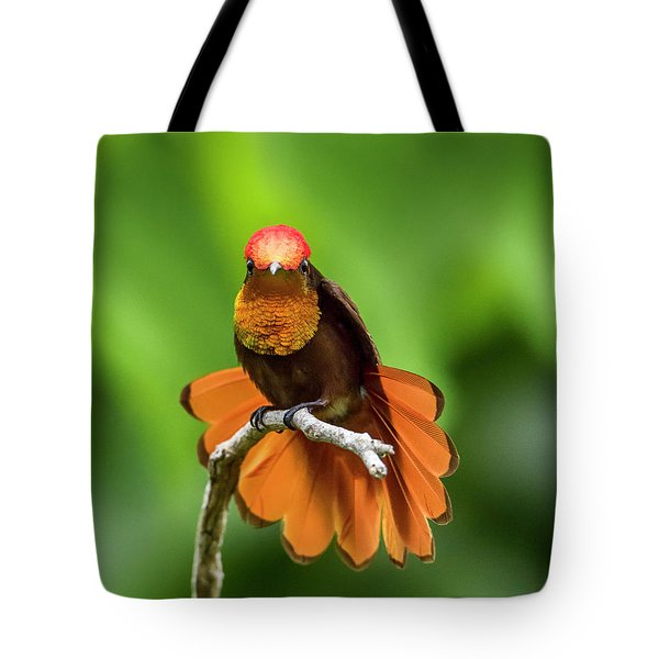 Tote Bag featuring the photograph Ruby's Glory by Rachel Lee Young
