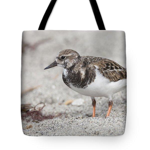 Ruddy Turnstone On The Beach Tote Bag