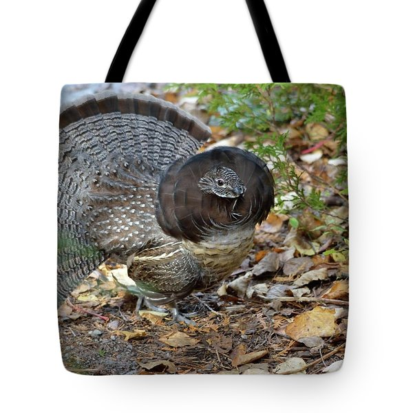 Ruffed Up- Ruffed Grouse Displaying Tote Bag