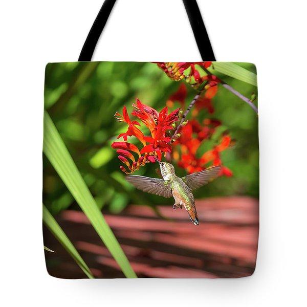 Rufous Hummingbird Feeding On Flower Nectar Tote Bag