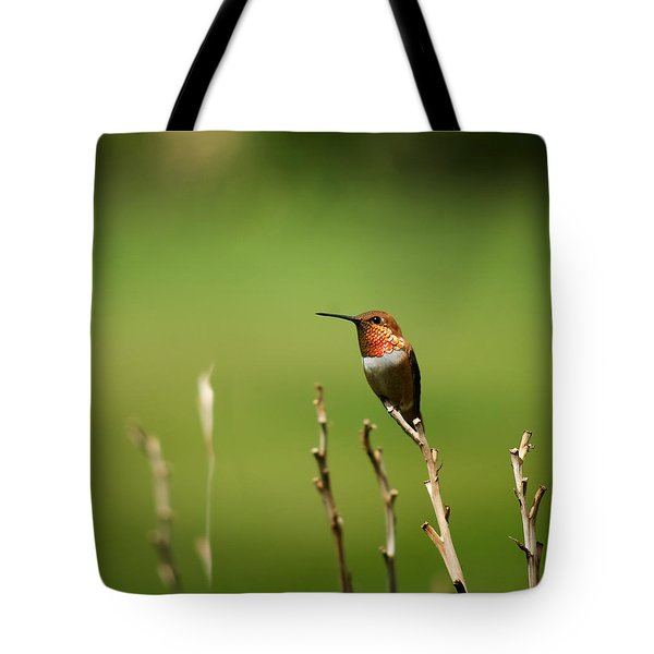 Rufous Hummingbird In Meadow Tote Bag