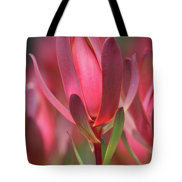 Tote Bag featuring the photograph Safari Sunset 2 by Chris Armytage