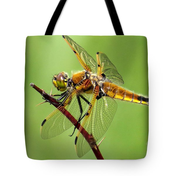 Saffron-winged Meadowhawk Tote Bag