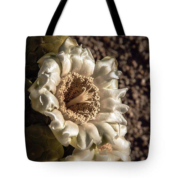 Saguaro Bloom Tote Bag
