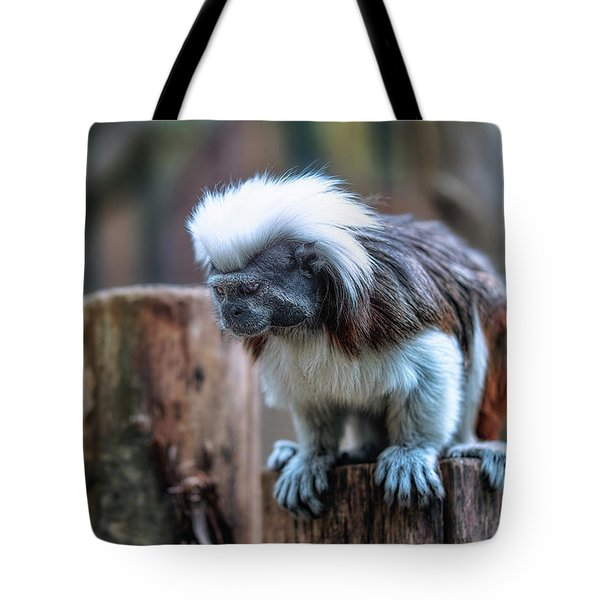 Tote Bag featuring the photograph Saguinus Oedipus  by Traven Milovich