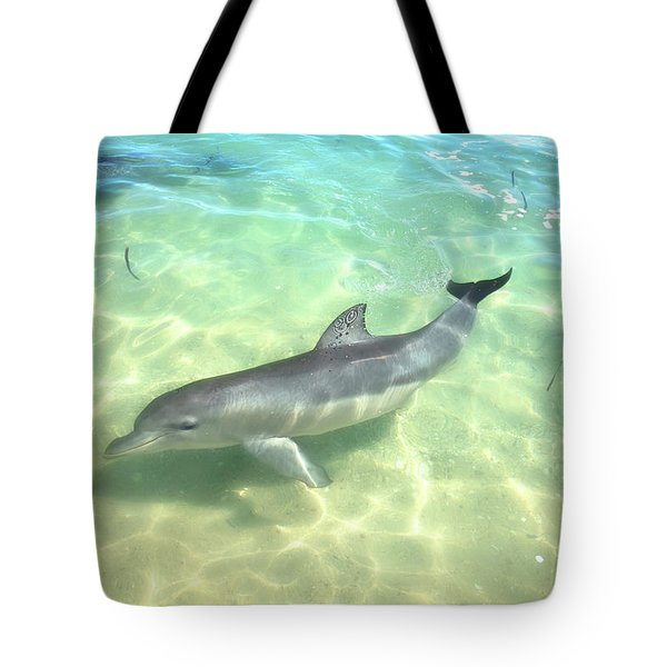 Tote Bag featuring the photograph Samu 1 , Monkey Mia, Shark Bay by Dave Catley