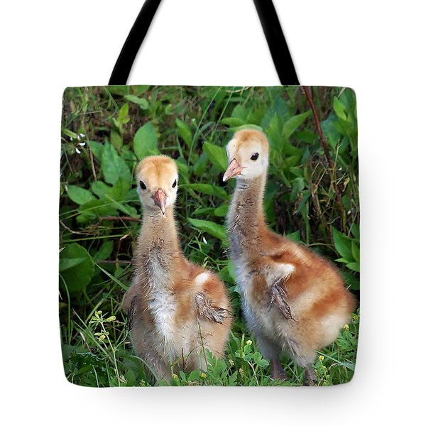Sandhill Crane Chicks Tote Bag by Chris Mercer