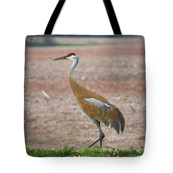 Tote Bag featuring the photograph Sandhill Crane In Profile by Bill Pevlor