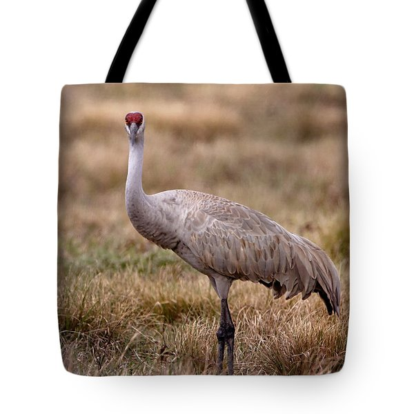 Sandhill Crane Looking On Tote Bag