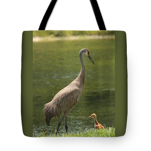 Sandhill Crane With Baby Chick Tote Bag by Carol Groenen