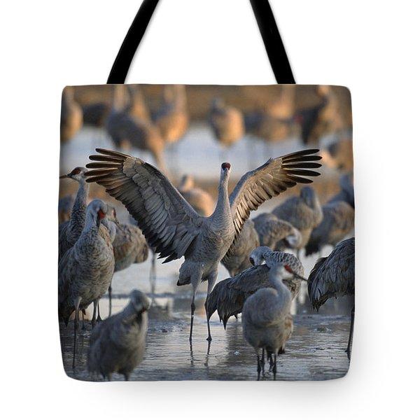 Sandhill Cranes Roost On The Platte Tote Bag