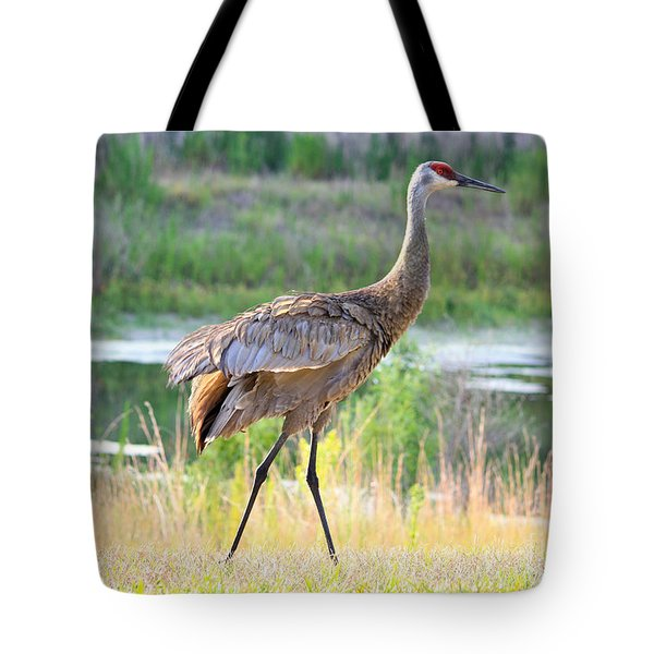 Sandhill In The Sunshine Tote Bag by Carol Groenen