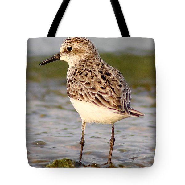 Sandpiper Portrait Tote Bag by Robert Frederick
