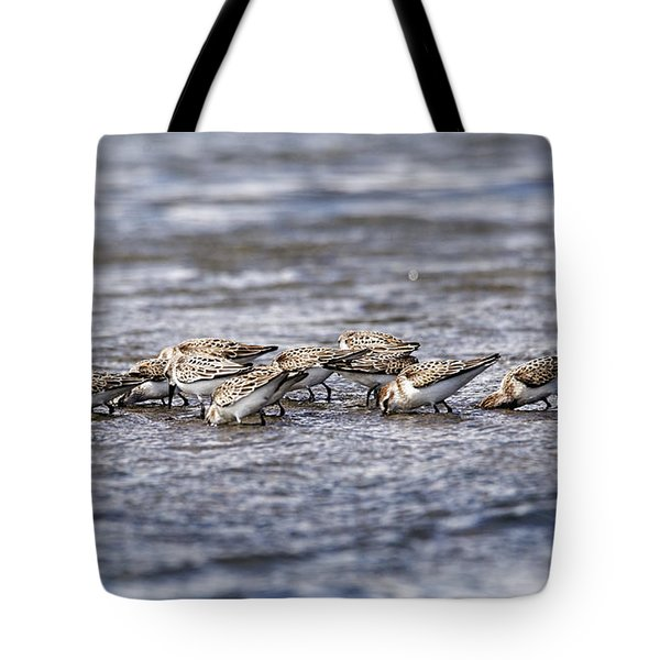 Tote Bag featuring the photograph Sandpipers Heads Down by Sue Harper