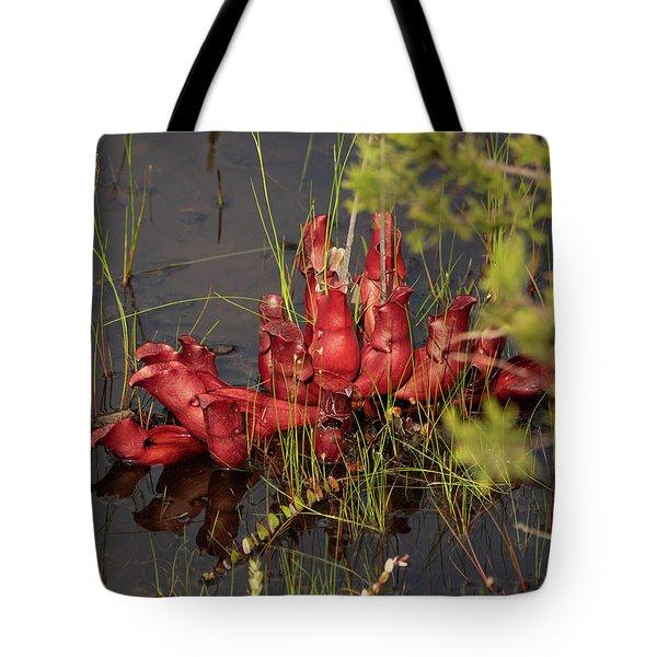 Tote Bag featuring the photograph Sarracenia Bug Bat Plant by Louis Dallara