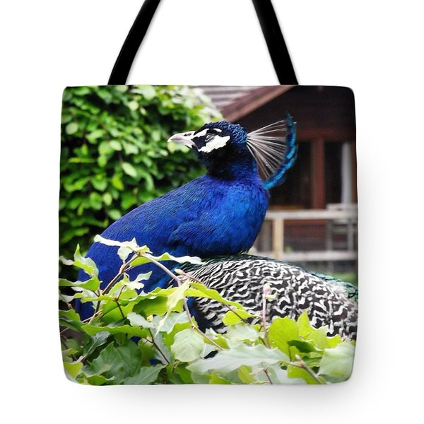 Temple Peacock Tote Bag
